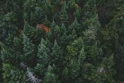 Ecolabel promuove la Gestione Forestale Sostenibile - AcquistiVerdi.it