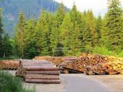 Illegalità nel settore foresta-legno: appuntamento al 14 luglio - AcquistiVerdi.it