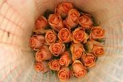 Rose equosolidali per San Valentino - AcquistiVerdi.it